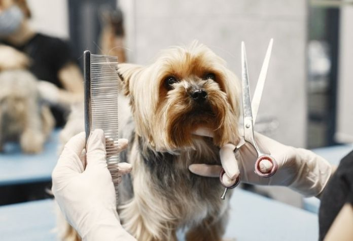 How to Start a Profitable Pet Grooming Business in Singapore