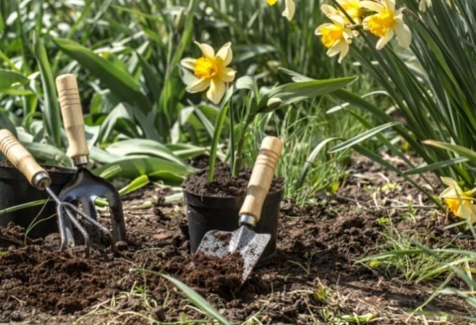 Top 10 Best Gardening Services in Singapore