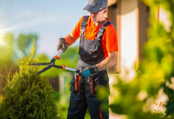 Top 10 Best Landscaping Company in Singapore